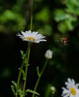Летящо насекомо; comments:2