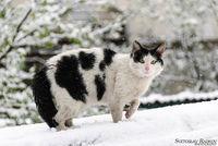 снежна изненада; comments:3