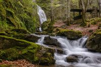 Тетевенската вълшебна гора; comments:11
