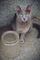Котка с буркан; comments:1
