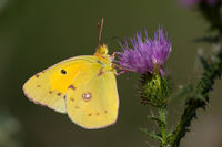 no name ( ID=2065473 ); comments:4