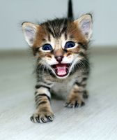 малко тигърче; comments:9