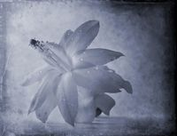 no name ( ID=2072613 ); comments:5