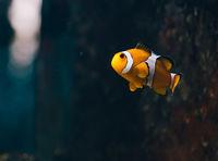 Nemo; comments:3