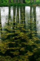 Дъждовен ден в зелено; comments:17