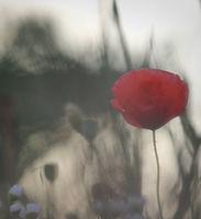 Да се влюбиш в сянката на вятъра; comments:22