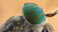 Horsefly; comments:6