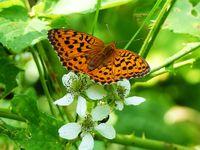 Пеперуда; comments:15