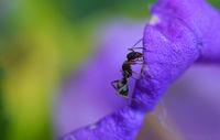 Ant-man; comments:7