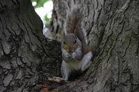 спокойно си похапвам семки в Hyde Park; comments:6