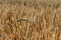 Урожай; comments:11
