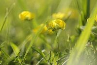Жълто-зелено II; comments:10