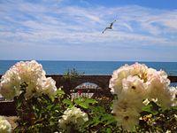 С дъх на рози и море; Коментари:2