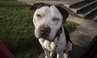 Куче за милиони; Няма коментари
