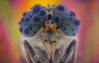 Horsefly; comments:2