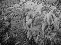 Къпещи се нимфи или Метаморфозата на Дафне; comments:7