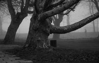 figure in the fog; comments:12