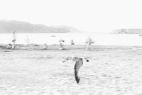 Спомен за морето; comments:8
