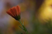 В градината; comments:4