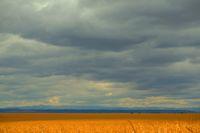 Царевица и облаци !; comments:7