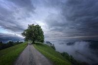 Сам в мъглата; comments:27