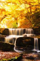 Златна есен; comments:7