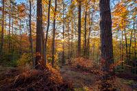 Добро утро есен!; comments:5