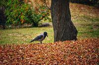 В парка съм сама..; comments:3