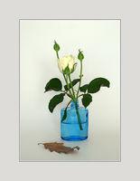 Натюрморт с бяла роза; comments:14