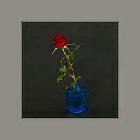 Натюрморт с червена роза; comments:10
