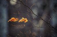 Зимна есен!; comments:6