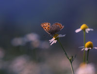 no name ( ID=2117942 ); comments:29