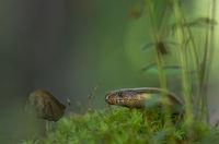 Горски аквариум; comments:52