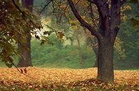 Есенно настроение; comments:7