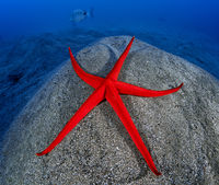 Red starfish; comments:6