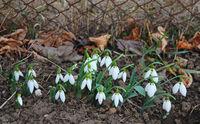 Цветята в моята градина...през зимата; comments:10