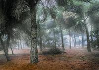 Кастилска гора; comments:4