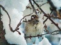 Щом е зима, да е красива... :):); comments:10
