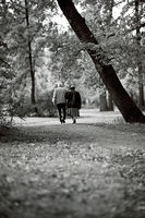 Златна есен; comments:6
