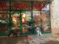 Дъждовен етюд; Няма коментари