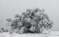 Зима, Плана, 2018г.; comments:7