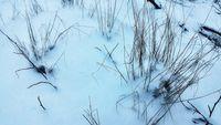 Да измръзнеш от студ; Няма коментари