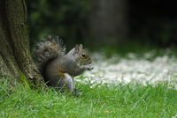 Squirrel; comments:4