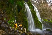 Днес край водопада; comments:7