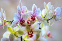 Orchidaceae; comments:6