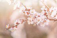 Пролетта ни изненада; comments:5