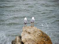 В студа е добре да имаш някого до себе си!; comments:2