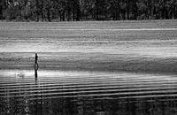 Рибарят, който ходеше...; comments:10