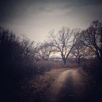 Дълъг е пътят до изгрева...; comments:7
