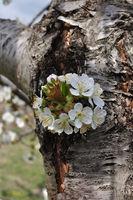 Пролет; comments:1